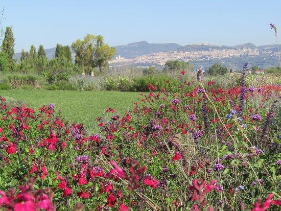 Il Lavandeto di Assisi Nursery照片