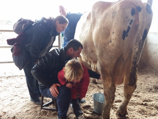 Santa Eugenia de Berga, Spain: L'experiència de munyir una vaca