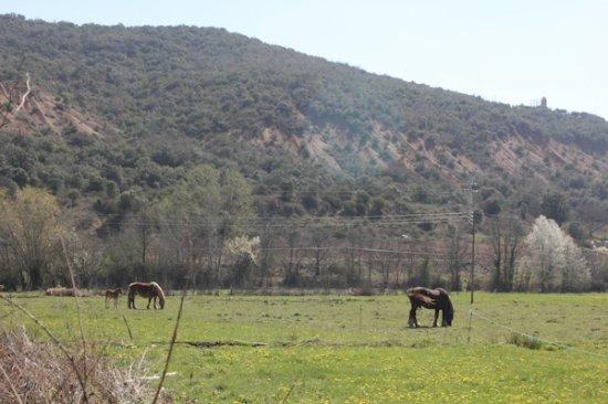 Secarejo, Spain: Vistas del entorno II
