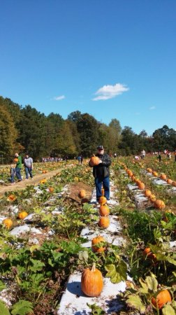 Moseley, VA: The tram takes you here to the pumpkin patch to select yours.
