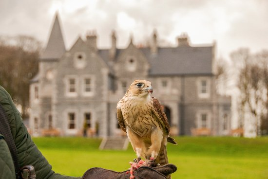 Ballina, Irlande : Falconry at Mount Falcon Estate