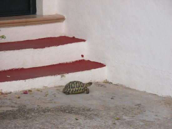 Hotel del Almirante - Collingwood House: Our afternoon visitor