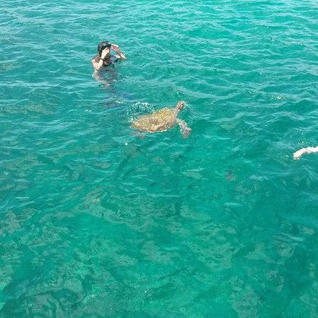 Tiami Catamaran Sailing Cruises: Swimming with the turtles
