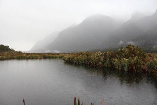 Fiordland National Park (Te Wahipounamu): 20170818102900_IMG_4264_large.jpg
