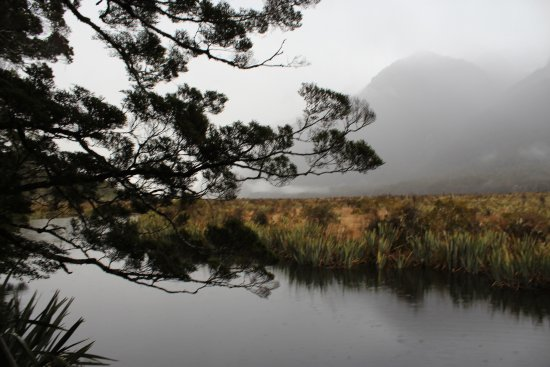 Fiordland National Park (Te Wahipounamu): 20170818103039_IMG_4268_large.jpg