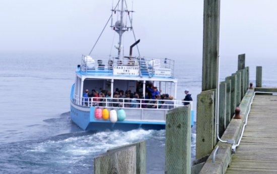 Brier Island Whale and Seabird Cruises: de boot waarmee de tochten worden gemaakt
