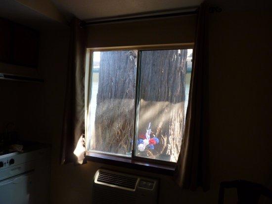 Redway, CA: Un redwood juste derrière la chambre (#3) pour nous saluer le matin !