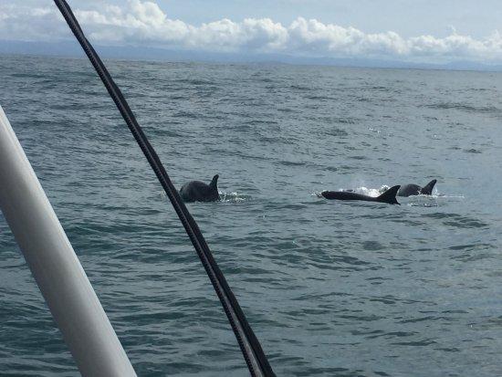Isla Boca Brava, Panama: delfines