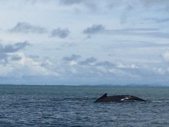 Isla Boca Brava, Panama: ballenas