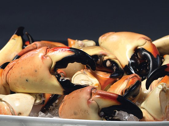 Truluck's Seafood, Steak and Crab House: Fresh Florida Stone Crab