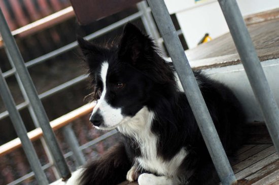 Crannog Cruises: Meg the skippers dog bought us luck