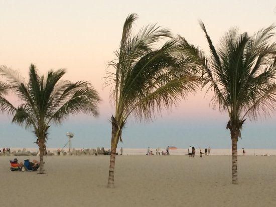 Point Pleasant Beach: palm trees at sunset