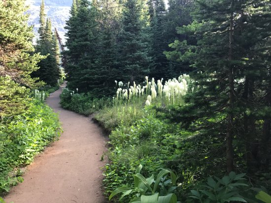 Many Glacier Lodge: A path through woods & around the lake. Whistle to let bears know your out and about.
