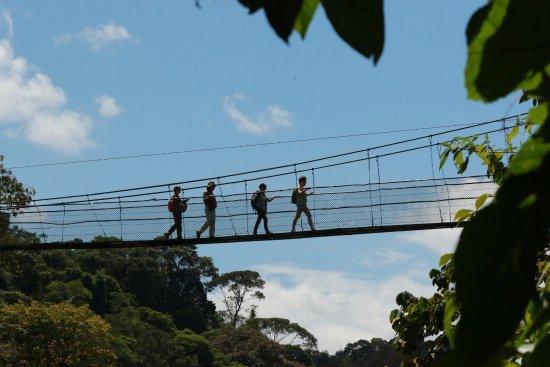 Tirimbina Biological Reserve: Bridge, view from below.