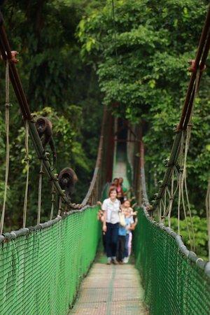 Tirimbina Biological Reserve: Hower Monkey crossing the bridge.