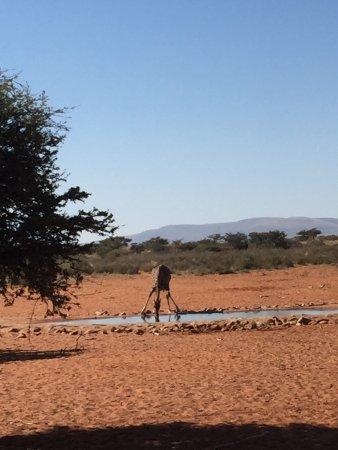 Tswalu Kalahari Game Reserve, Sør-Afrika: photo2.jpg