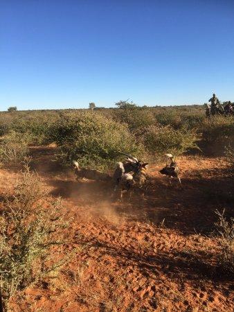 Tswalu Kalahari Game Reserve, Sør-Afrika: photo4.jpg