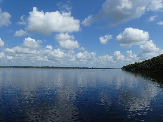 Myakka River State Park: View from the airboat across the lake.......
