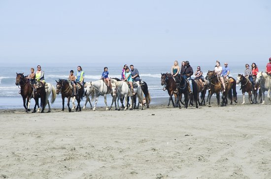 Ocean Shores, WA: The hotel is just steps away from North Beach, which lets you park and rent a horse for a ride.