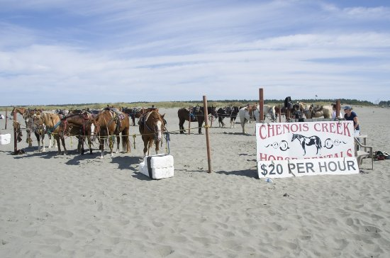 Ocean Shores, WA: The beach near the hotel has Chenois Creek, a horse-rental setup to enjoy the surf on a pony.