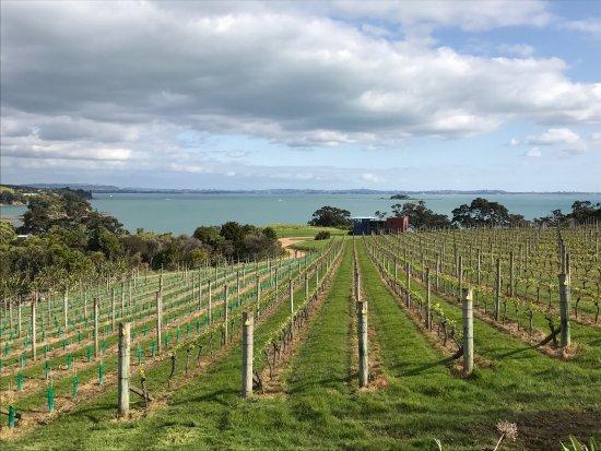 Île de Waiheke, Nouvelle-Zélande : photo1.jpg