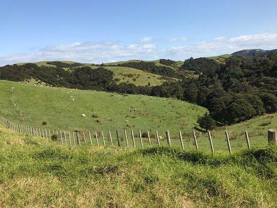 Waiheke Island, New Zealand: photo4.jpg
