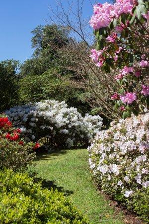 New Plymouth, New Zealand: Springtime at Pukeiti