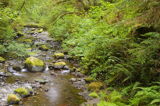 There are lots of easy trails throughout Quinault Rain Forest. Be sure to visit the ranger stati