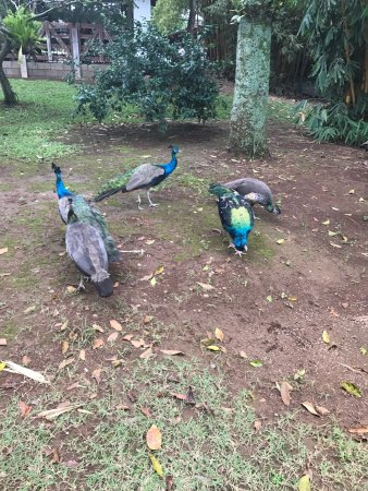 Alajuela, Costa Rica: Great place for kids and adults. I loved the peacocks and the gardens