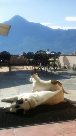 Trezzone, Italie : The dogs waking up looking over the breakfast area
