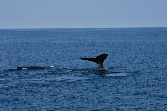 Cape Ann Whale Watch: photo1.jpg