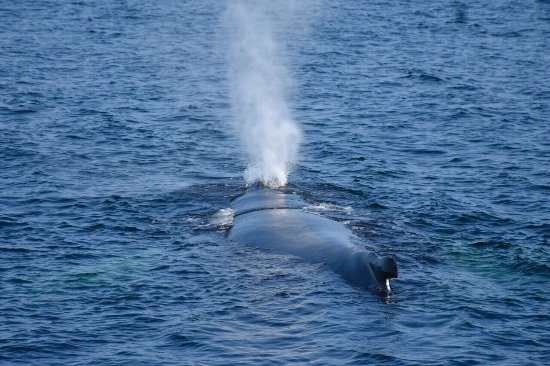 Cape Ann Whale Watch: photo2.jpg