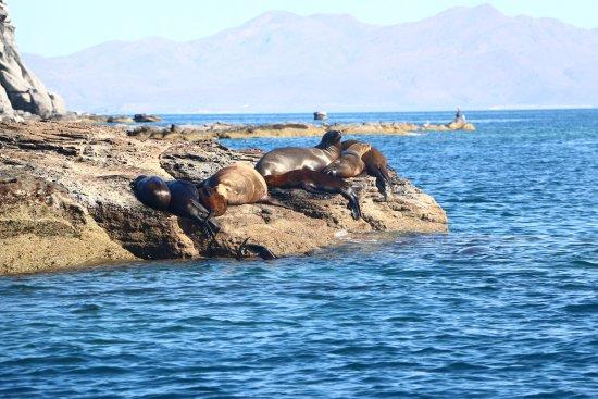 Sea Lions @ Coronado Island