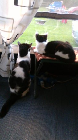Radcliffe on Trent, UK: Our cats in the awning enjoying our seasonal pitch