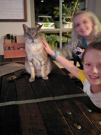 Petersham, Australia: The Pub Cat!