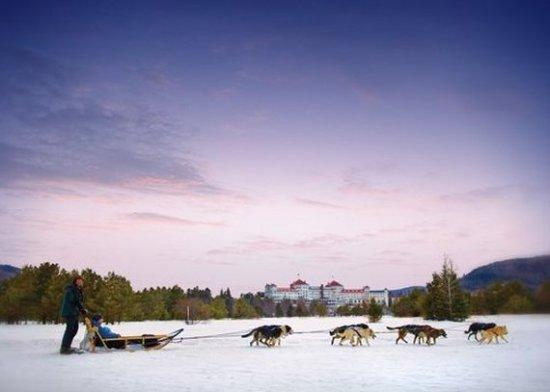 Omni Mount Washington Resort: Sleigh Dogs