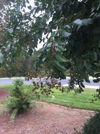 Albemarle, Carolina del Nord: photo4.jpg