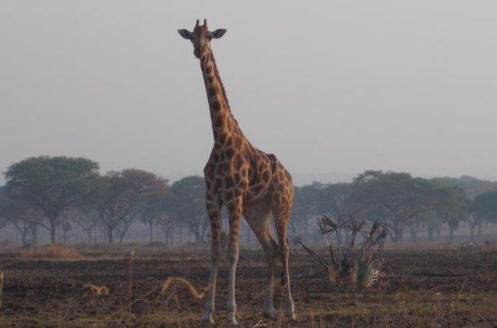 Excursion d'une journée au parc national de Nairobi : 1-Day Trip to Nairobi National Park