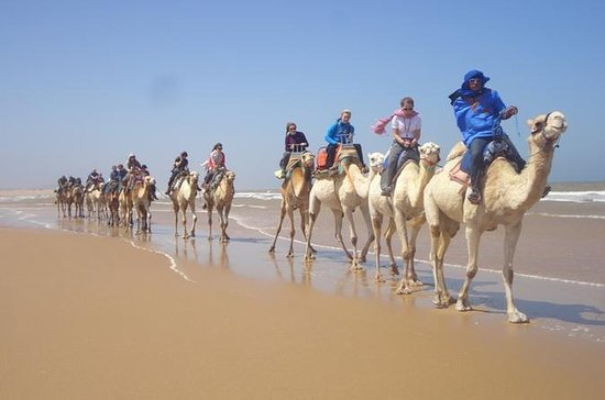 Day Camel Ride with Picnic on...