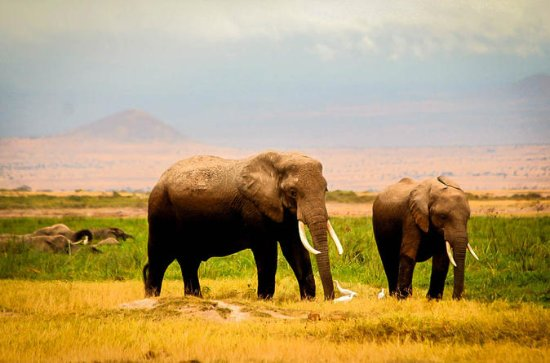 3-Day Amboseli Private Safari from...