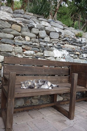 Manuel's Guest House: Gatto residente