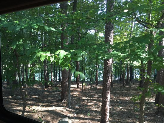 Mountain Pine, AR: View from rear camper window.