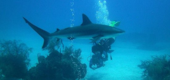 Roatan Shark Dive: photo0.jpg