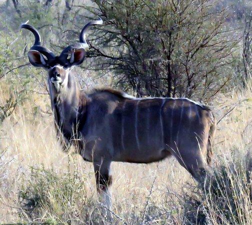 Bhulela Africa Safaris