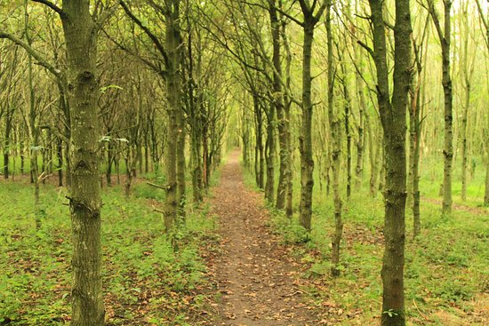 Lymm, UK: Footpath through Spud Wood