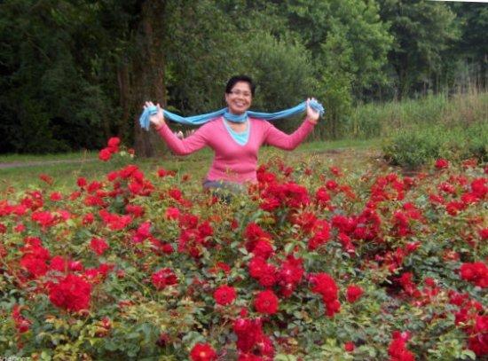 Westbroekpark: red roses in abundance