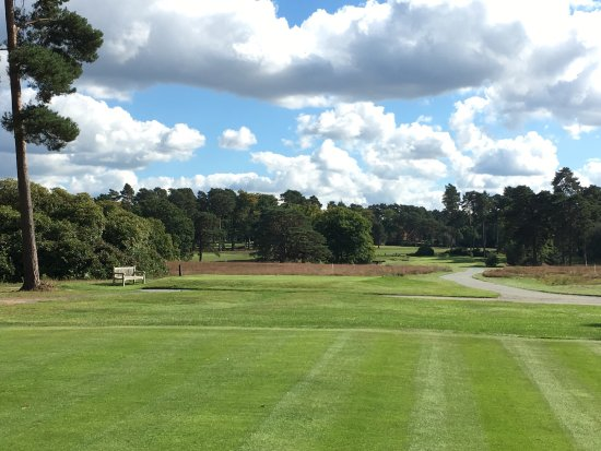 Woking, UK: 1st hole, playing over the heather toward the Scott's pines