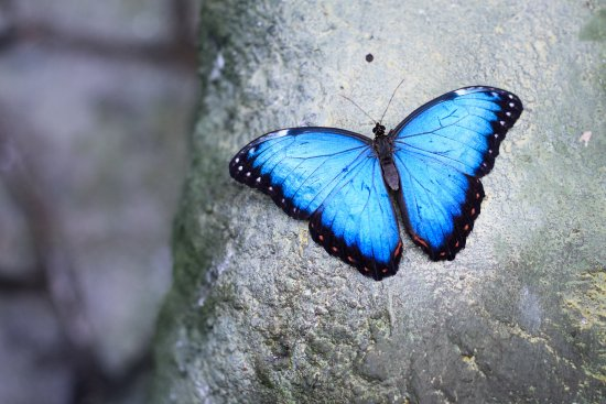 Papilonia - motyli dum Praha