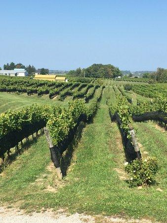 Tawse Winery : photo2.jpg