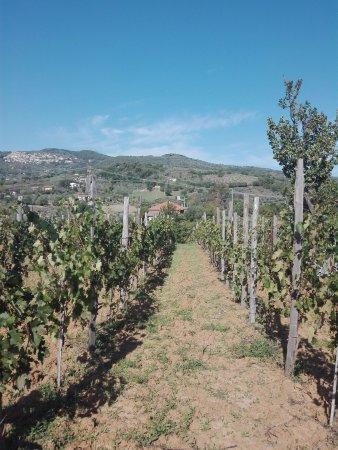 Felitto, Italia: Piacevole passeggiata nella natura